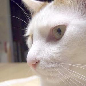 猫の慢性腎臓病 ふくちゃん編 6月13日のふくちゃん日記
