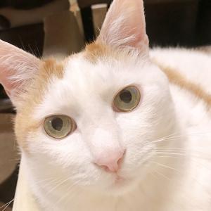 猫の腎不全・慢性腎臓病 リンとFGF23