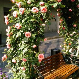 毎年恒例100万本のバラ特別企画レッスン