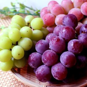 食べたブドウの種~その後