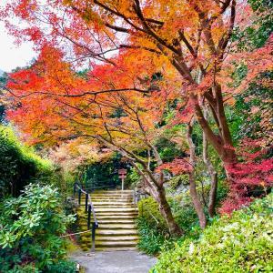 鎌倉の紅葉を楽しんできました