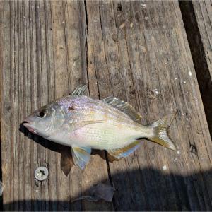 ガルベストン湾で釣れた‼︎ファミリーラインで話題沸騰↑