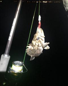 久々の夜釣りへ