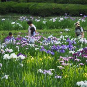 薬師池公園(2)