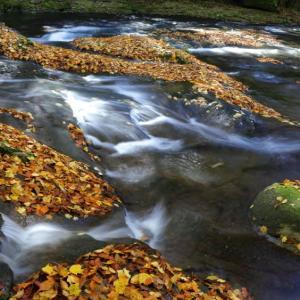 落ち紅葉の菊池渓谷