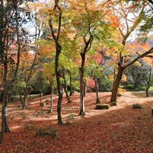 湯布院・紅葉の森