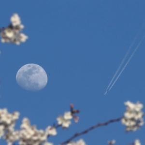 月との情景 Ⅱ