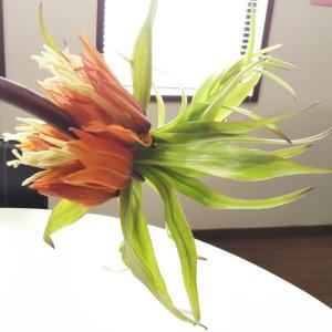 ♡見たこともないとっても珍しいお花♡