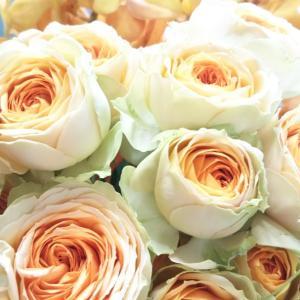♡バラを長く楽しむマル秘方法♡