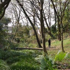 成城みつ池緑地観察会