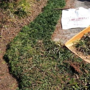 春彼岸の墓掃除