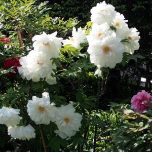 GW、白花の饗宴