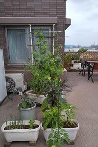 今年も家庭菜園が始まりました。and収穫が…(^o^)   「優舞美」布製・帯締め入れ