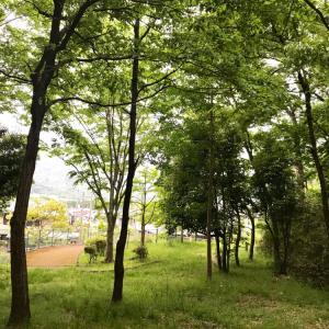 素敵な公園発見
