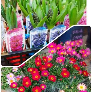 春のお花がたくさん入りました☆