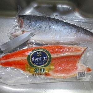 銀鮭に手こずる