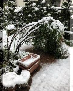 春の雪・・・・・