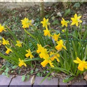 春・・・・・。