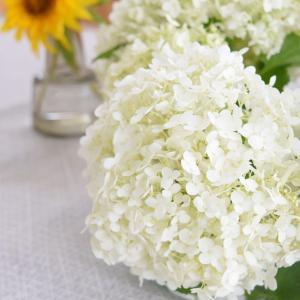 6月のお買い物記録と庭の花