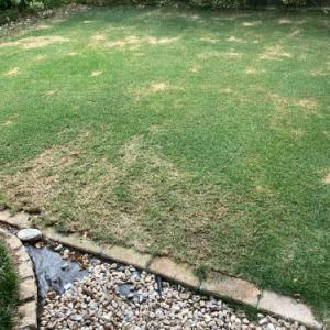 芝刈り、灌水 2021.06.12