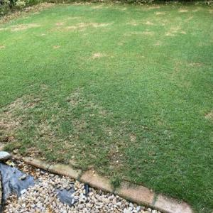 芝刈り、灌水 2021.06.20