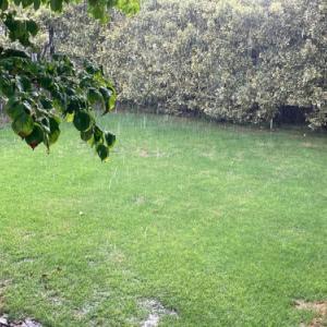 芝生 施肥