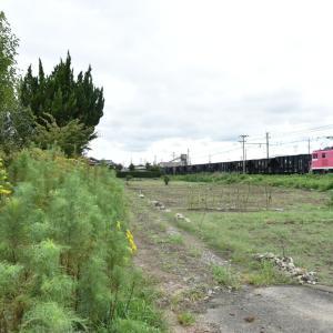 初秋の花々と貨物列車