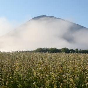 羊蹄山と蕎麦畑