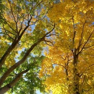秋真っ盛り・変化するニセコ周辺のスキー場