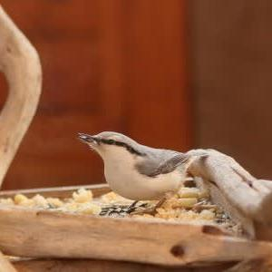 小鳥の来訪者