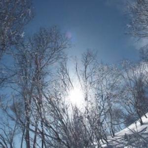 久々の青空スキー2)木々の輝き