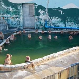 函館行2)熱帯植物園の温泉サル