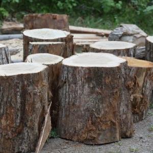 薪の切断作業終了