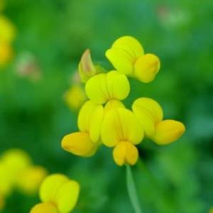 初夏の花達7)