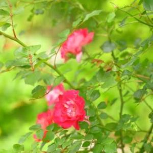 夏の花達5)