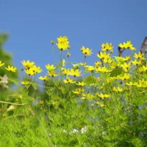 夏の花達9)