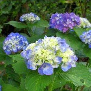 真夏の花達3)