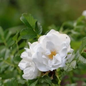 夏の花達2)