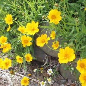 夏の花達3)