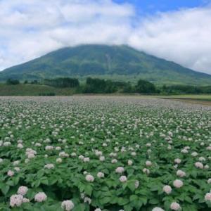 ジャガイモ畑と麦畑