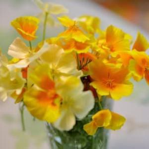 ハナビシソウと百合の花