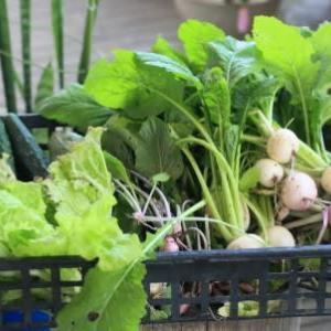真夏の野菜達