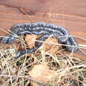 腐葉土ボックスと蛇
