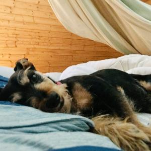 枕元にジャックと小梅♡