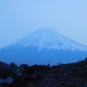 今朝の富士とハナモモ