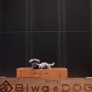 Birthday trip 〜biwa dog〜