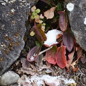 四季の変化を超える外来種の環境適応能力