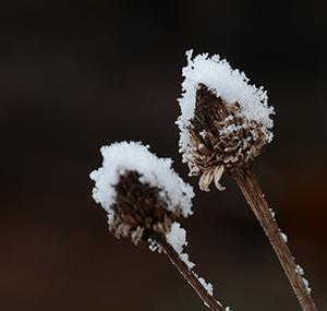 冬型の合間の低気圧と前線の置き土産、小雪で目立つ枯れ木枯れ草