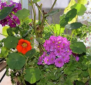 デタラメでも賑やかな冬の寄せ植え