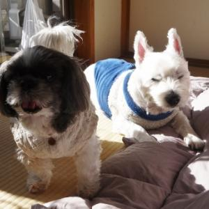 保護犬を世話して幸せな家へ 児童養護施設の子たちが明るく送り出す